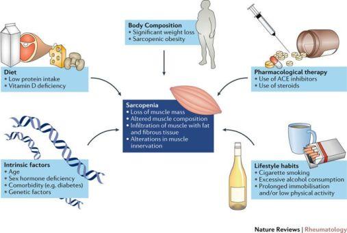 fattori inducenti sarcopenia