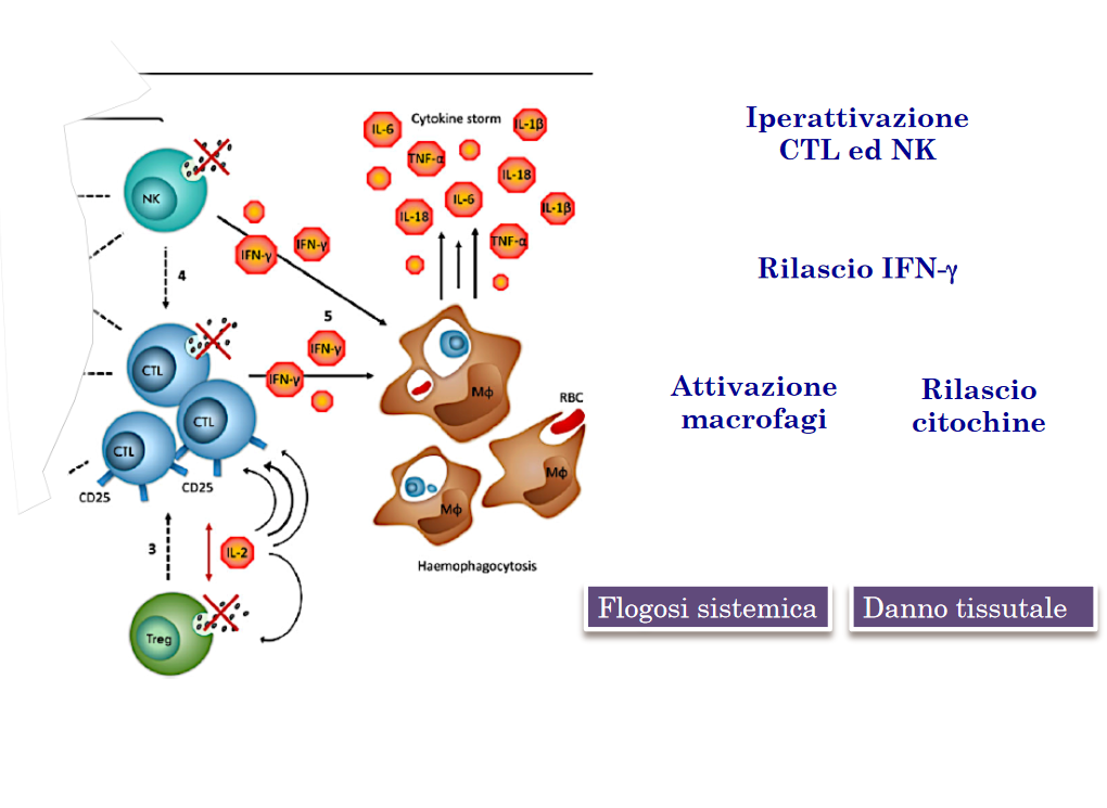 patogenesi mas